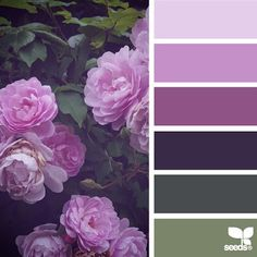 today's inspiration image for { flora palette } is by @wild_rubus ... thank you, Caroline, for another incredible #SeedsColor image share!