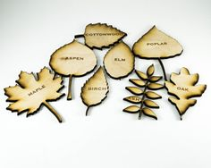 New to JDBmercantile on Etsy: Wooden Leaf Identification Kit -Montessori Inspired Educational Toy Natural Wood Homeschool Manipulatives Nature Study School Supplies USD) Montessori Science, Montessori Classroom, Preschool Curriculum, Homeschooling, Solar System Mobile, Leaf Identification, Outdoor Classroom, Handmade Hair Accessories, Outdoor Learning