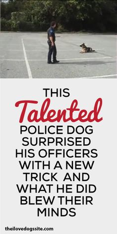 This Talented Police Dog Surprised His Officers With A New Trick And What He Did Blew Their Minds!