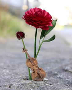 1 million+ Stunning Free Images to Use Anywhere Music Wallpaper, Cute Wallpaper Backgrounds, Love Wallpaper, Pretty Wallpapers, Splash Photography, Cute Photography, Beautiful Roses, Beautiful Images, Miniature Photography