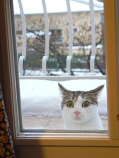I have seen things....terrible things...white cold things lemme in now!