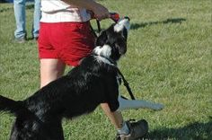 How to Survive Your Dog's Arousal Biting - Whole Dog Journal Article