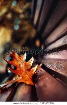 Autumn Yellow Fallen Leaf On Park: стоковые изображения в HD и миллионы других стоковых фотографий, иллюстраций и векторных изображений без лицензионных платежей в коллекции Shutterstock.  Ежедневно добавляются тысячи новых высококачественных фотографий. Pictures For Sale, Park, Parks
