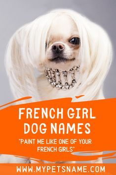 French names for female dogs are perfect for when you want a feminine sounding name that screams elegance and style. Check out our list of classic and cute French girl dog names for inspiration for your pooch's name. Female Pet Names, Girl Pet Names, Good Girl Names, Puppy Names, Cool Names, French Dog Names, French Dogs, Elegant Names, Hairless Dog