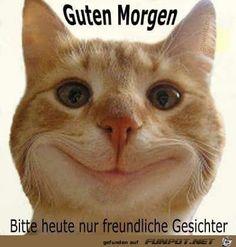 I get my NEW teeth tomorrow . Funny Cat Compilation, Funny Cat Videos, Funny Cat Pictures, Funny Animal Memes, Cat Memes, Funny Animals, Cute Animals, I Love Cats, Cute Cats