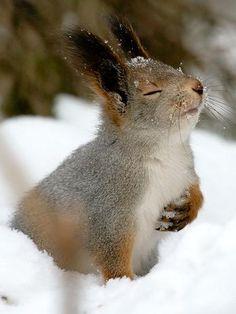 Este esquilo foi registrado em um parque na Rússia. O animal parece estar tendo algum pensamento profundo, mas certamente estava apenas cheirando para ver se não tinha ninguém por perto quando ele escondeu algumas nozes. Veja a seguir outras momentos diferentes de animais que fotógrafos registraram  Foto: The Grosby Group