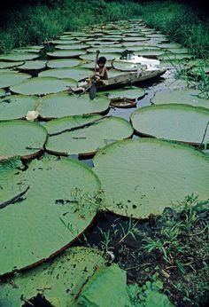 Bruno Barbey- Amazon river, Brazil, 1966