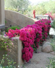 Mediterranean garden idea