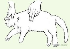 Save a Choking Cat - wikiHow.  I hope I am never called upon to perform such a feat.