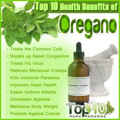 Top 10 Health Benefits of Oregano