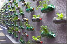 ¿Qué hacemos?: Ideas para jardines verticales