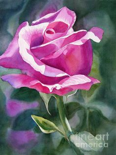 Painting - Rose Violet Bud by Sharon Freeman Watercolor Cards, Watercolour Painting, Watercolor Flowers, Watercolors, Rose Art, Fruit Art, Arte Floral, Flower Art, Illustrations