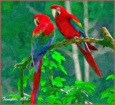Come i pappagalli divennero colorati Ma un giorno il pappagallo Felix decise che non voleva essere bianco perché non si distingueva dagli altri. Volle allora essere colorato e si recò a cercare dei colori. Andò da un imbianchino, ma lui #colorati #creazione #pappagalli