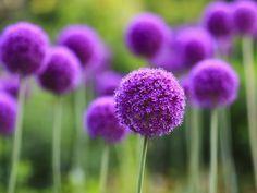 9 Real Life Dr. Seuss Plants you can have in your Backyard   English Content