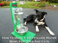 How To Make A Self-Filling Water Bowl For Dogs And Cats! More info here: http://homesteadingsurvival.com/how-to-make-a-self-filling-water-bowl-for-dogs-and-cats/