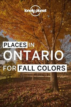 Looking to get our of Toronto? Here are the best places to visit in Ontario this fall including some of the best hiking trails in Ontario, some of which are day trips from Toronto.