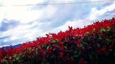 #auringonlasku #thisisportugal #finnishmoments #lovelyportugal #portugal_photolovers #portugal_bestsunset #sunset #sunsetlovers #sunset_madness #ig_week_sunsets #fotocatchers #fotofanatics_nature #fotofanatics_sky #fiftyshades_of_twilight #fiftyshades_of_nature #amateurs_shot #water_shots #water_captures #landscape #landscape_lovers #earth_shotz #loves_skyandsunset #reflection #nikon #ig_europe #lake #skylovers #bestcaptureglobal #tozas_ #sunsetporn