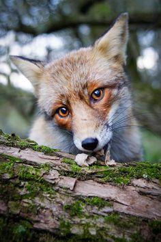 "Konsta Punkka, aka the ""squirrel whisperer,"" captures magnificent close-up photos of wild animals"
