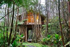 Tree houses exist in real life, and they aren't just for kids. Don't believe us? Check out these tree houses on Airbnb, and then plan your next trip.