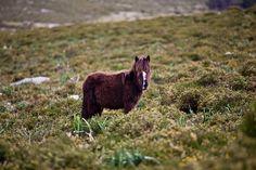 Wild Horses in A Groba (Baiona), Galicia... like a Rolling Stone xD