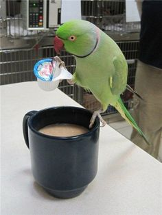 I love coffee break birdie...he's awesome! Hahahaha! So cute.