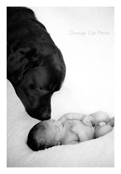 if a human baby ever happens, this would be a nice picture Newborn And Dog, Newborn Shoot, Baby Dogs, Newborn Pictures, Baby Pictures, Newborn Pics, Human Babies, Foto Baby, Precious Children