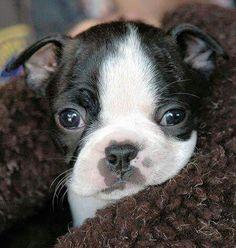 Beautiful pup!
