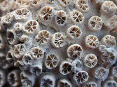 coral - macro - 05/2012