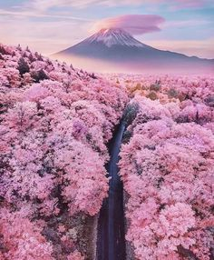 It's cherry blossom season around Mount Fuji and all over Japan right now, how breathtaking ! 🌸🗻🇯🇵 Are Japan's cherry blossoms on your bucket list ? Tag your travel partner ! — 📍 — 📸 Photo by ​ Nis Landscape Photography, Nature Photography, Travel Photography, Photography Aesthetic, Stunning Photography, Canon Photography, Photography Photos, Lifestyle Photography, Fashion Photography