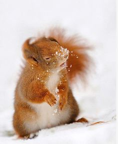 easy, breezy, beautiful cover squirrel lol The longer I look it at it, the funnier it gets! Funny Animal Memes, Funny Animal Pictures, Funny Memes, Animal Quotes, Funny Sayings, Animal Pics, Cute Animal Humor, Funny Photos, Funny Animals With Captions