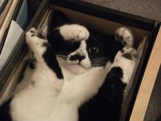 Funny cat pictures part if it fits i sits I Love Cats, Cute Cats, Funny Cats, Funny Animals, Cute Animals, Animal Funnies, Crazy Cat Lady, Crazy Cats, Neko
