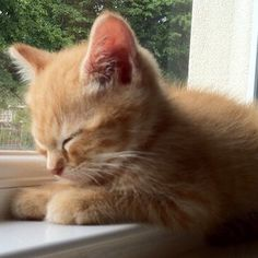 Cute kitten                                                                                                                                                      More