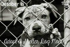"""October is """"adopt a shelter dog month."""""""
