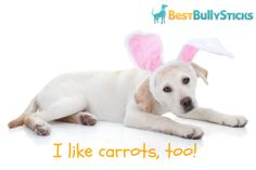 Carrots are a favorite of dogs! Easy, healthy recipe courtesy of @Kirby Sandifer Sandifer the Dorkie
