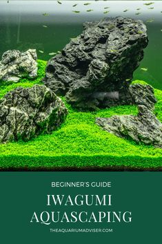 Iwagumi tank is one of the most simple and elegant looking aquascape aquarium setup, it looks easy to accomplish but is not. This aquascaping beginner guide will teach you how to do it. Aquarium Setup, Diy Aquarium, Tropical Aquarium, Aquarium Design, Marine Aquarium, Aquarium Decorations, Planted Aquarium, Tropical Fish, Aquarium Ideas