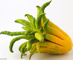 Buddha's Hand, which is native to China, has a delicious zest and a sweet edible pith - bu...