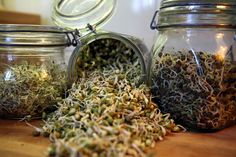 Sprouts truly are the best locally-grown food, yet not enough people eat or grow them. Considering there many health and environmental benefits, it's time to consider adding sprouts to your diet. http://www.hungryforchange.tv/article/10-reasons-to-love-sprouts-plus-diy-sprouting-at-home