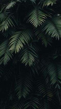 10 Tropical Jungle iPhone X Wallpapers wallpapers, Hintergrund - PintoPin - - 10 Tropical Jungle iPhone X Wallpapers – iPhone Wallpapers 10 Tropical Jungle iPhone X Wallpapers 10 Tropical Jungle iPhone X Wallpapers by Preppy Wallpapers. Leaves Wallpaper Iphone, Original Iphone Wallpaper, Palm Wallpaper, Tropical Wallpaper, Tumblr Wallpaper, Screen Wallpaper, Walpaper Iphone, Iphone Wallpaper Jungle, Iphone Wallpaper Minimal