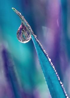 Water Drops - purple and blue . leaf macro with water droplet Dew Drops, Rain Drops, Drip Drop, Fotografia Macro, Turquoise And Purple, Aqua Blue, Blue Green, Water Photography, Levitation Photography