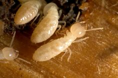 Fumapest Melbourne / Victoria is a Termite Control and Pest Control Specialist company based in Melbourne.