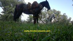 Eta Cavalo bom tchê.    http://rendacompleta.com