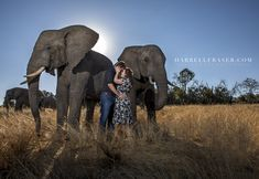 Prewedding Engagement Photoshoot with Louis and Kristel with these Gentle Giants! #engagement #photographer #elephants