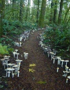 A fungi path located at the Cloud Mountain Retreat in Washington.