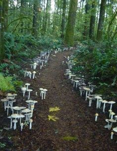 A fungi path located at the Cloud Mountain Retreat in Washington. Cloud Mountain Retreat Center is a non-sectarian Buddhist center hosting r...