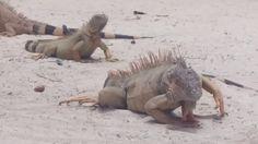 Chinchorro Reefs and Wrecks Kangaroo, Underwater, Blog, Animals, Baby Bjorn, Animales, Animaux, Under The Water, Blogging
