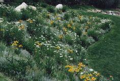 wildflower gardens | ... Wildflower in Medow Gardens for Mixes Natural Gardens | Nordic Gardens