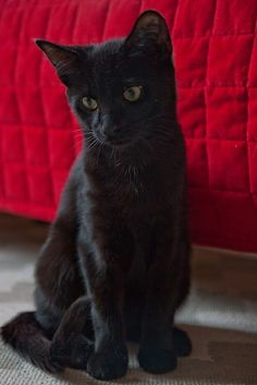 I especially love black cats. Of all the   cats I've had in my lifetime, my black cats have always been the   smartest.