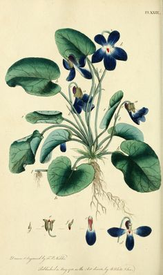 Thirty-eight #plates, with explanations; - Biodiversity Heritage Library #botanical #illustrations