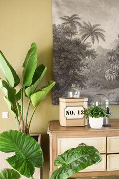 Pflanzen f r mein badezimmer und einblicke endlich for Pflanzen wohnzimmer geeignet
