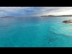 Large Pod Of Dolphins Swimming Near The Shore Will Take Your Breath Away! - QuirlyCues